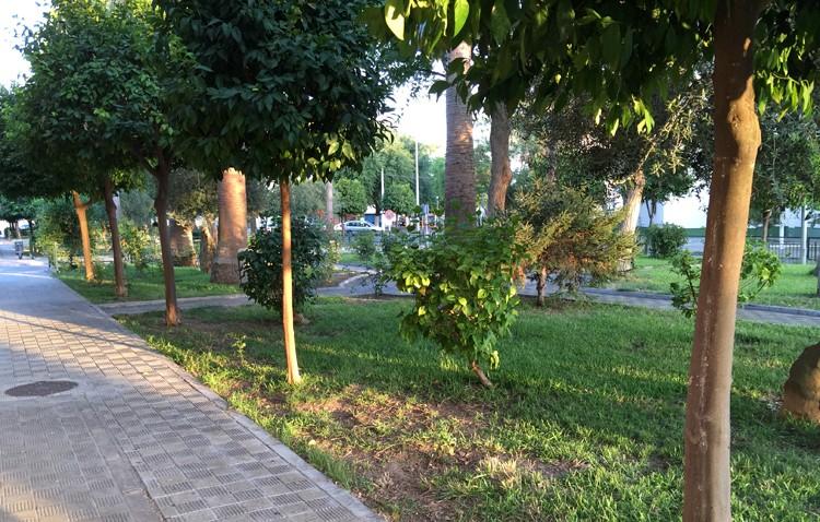 Parques y Jardines actúa en las zonas verdes de la avenida Gran Capitán