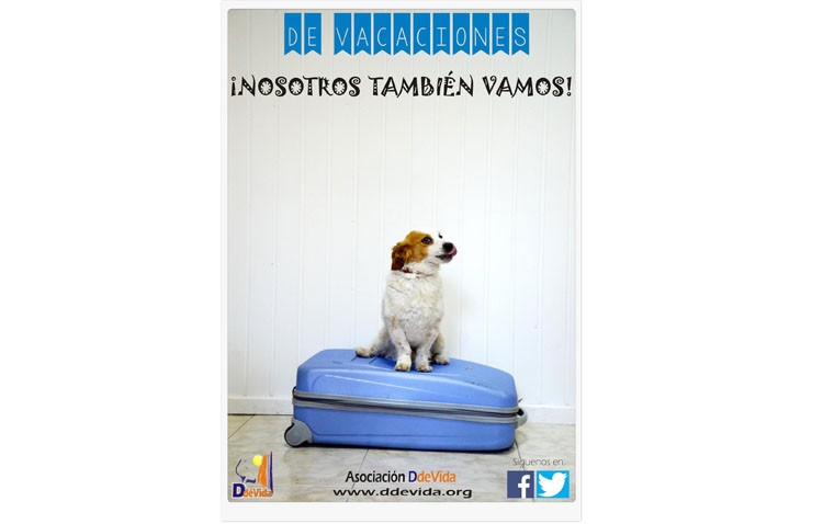 Ddevida informa sobre las mejores opciones para las vacaciones de las mascotas