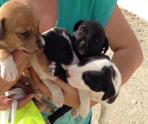 Llamamiento urgente para acoger una camada de perros encontrados
