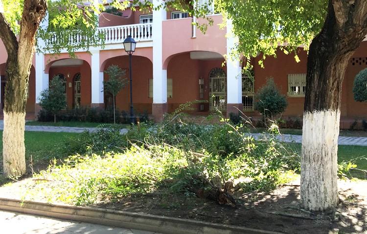 Parques y Jardines muestra su «preocupación» por el estado de los árboles del paseo de Consolación