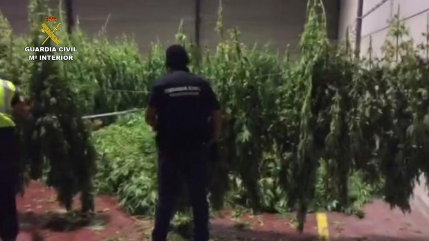 La Guardia Civil de Utrera interviene más de 2.500 kilos de marihuana