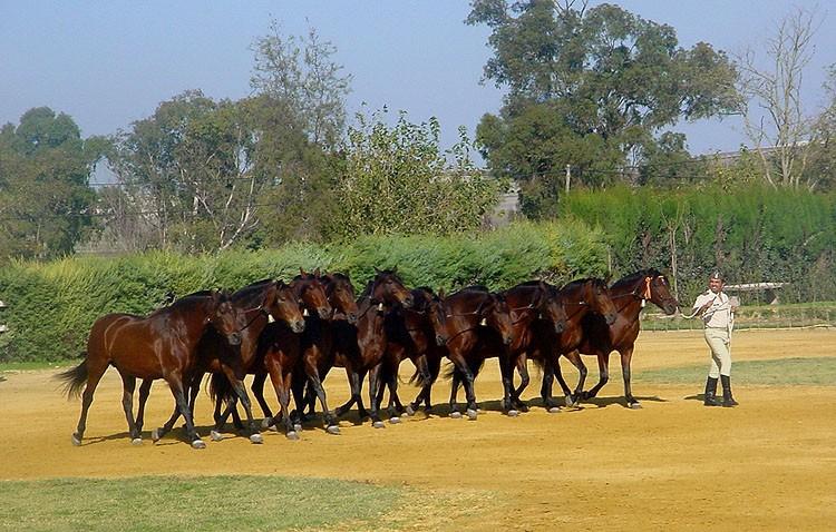 Equus-Utrera organiza una visita a la yeguada militar de Jerez