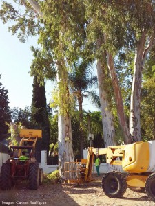 talar eucaliptos feria (carmen rodriguez) 1