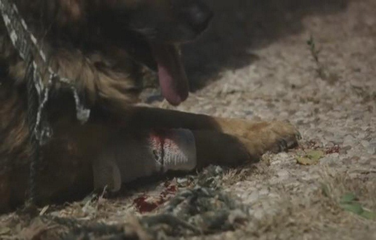 «Yo sí puedo contarlo»: La nueva campaña de la Guardia Civil contra el maltrato animal