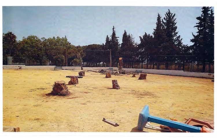 Trabajadores municipales están talando árboles poniendo «en riesgo su seguridad»