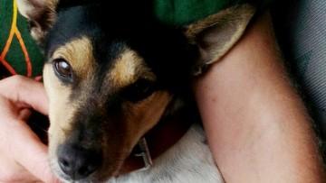 La curiosa historia de «Chispa», un perro que llegó desde Utrera a Murcia