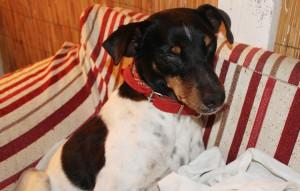 asociacion bienestar animal (1)