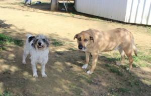 asociacion bienestar animal (5)