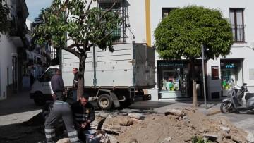 El gobierno local decide finalmente eliminar el naranjo del Niño Perdido (VÍDEO)