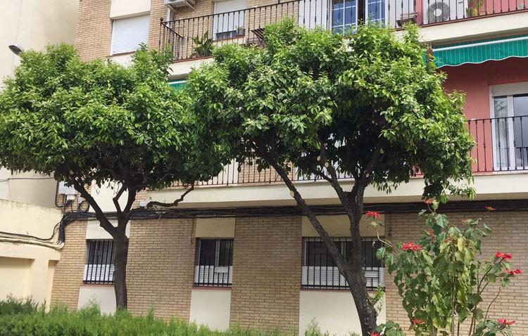 Vecinos de la barriada Cronista Manuel Morales se movilizan contra la eliminación de dos naranjos