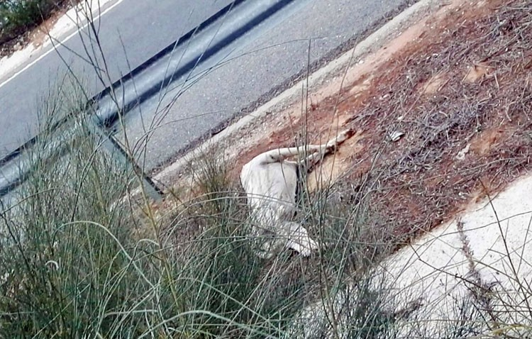 El interminable epílogo del trágico final para muchos perros en la autovía de Sevilla