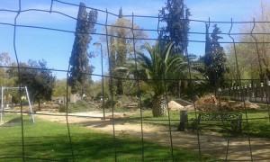 Tala de los árboles en el parque de Consolación