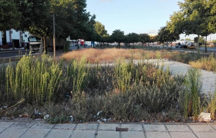 El gobierno local reconoce el «abandono bastante grande» del polígono industrial El Torno