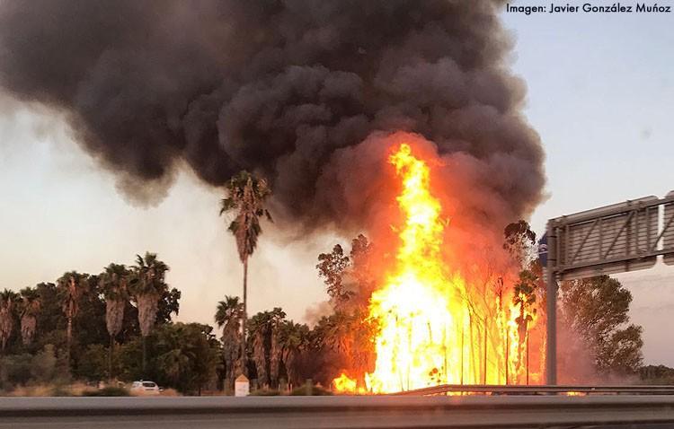 Un incendio arrasa parte de la masa forestal del «Trance de Aragón»