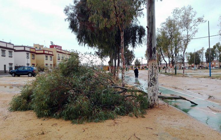 La noche de lluvia y viento deja en Utrera una docena de intervenciones