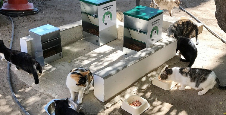 El programa de control de las colonias felinas logra esterilizar a 163 gatos