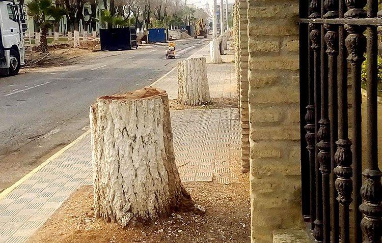 Una manifestación protestará este lunes contra la «tala indiscriminada» de los árboles del paseo de Consolación