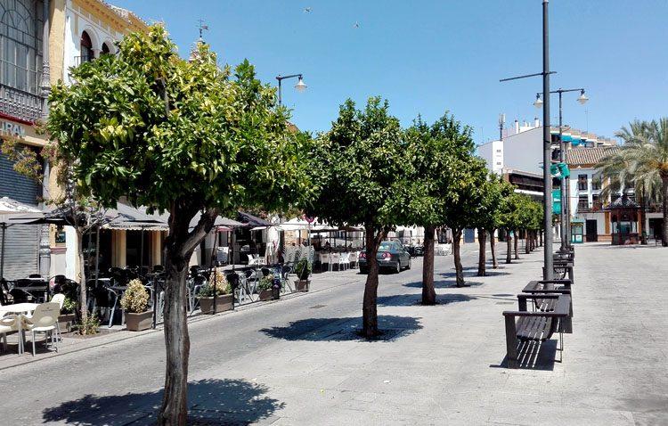 El gobierno local paraliza la decisión sobre el futuro de los naranjos de la plaza del Altozano