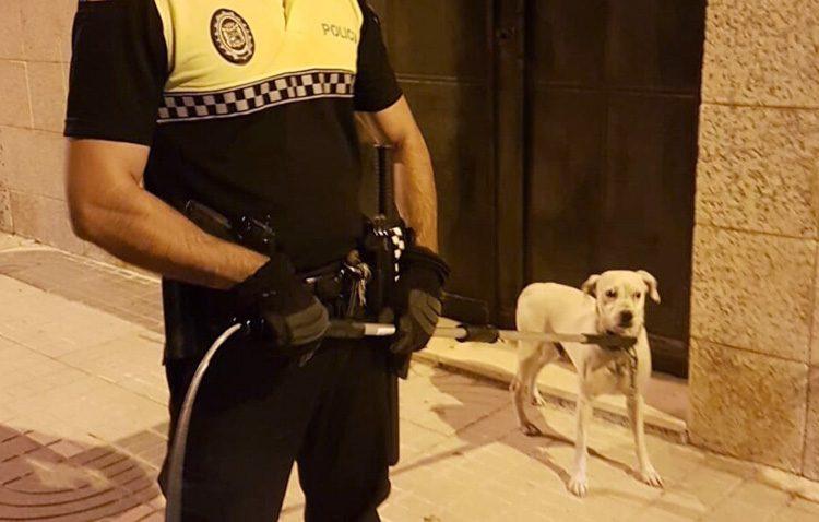 Multa de hasta 500 euros tras abandonar a su perro para irse de vacaciones