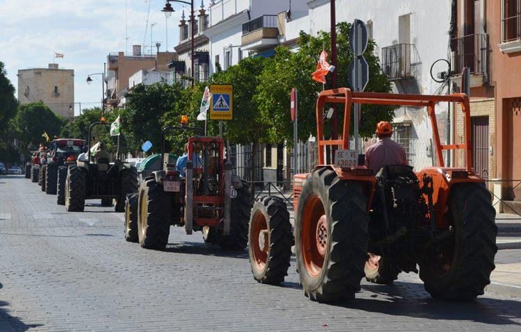 Los agricultores estallan y protagonizan una multitudinaria tractorada en Utrera contra la precaria situación del sector aceitunero