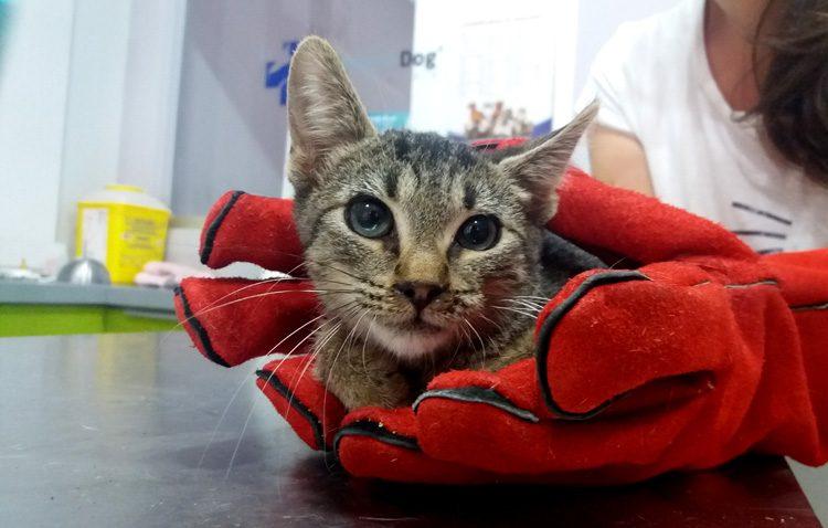 Ddevida llevará la gestión de las colonias de gatos callejeros de Utrera a unas jornadas felinas andaluzas