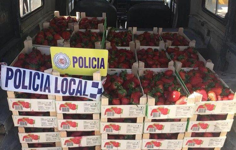 Denunciado un vecino de Utrera por ejercer la venta ilegal con más de 200 kilos de fresas