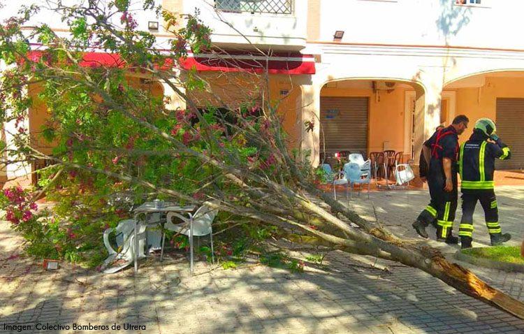 Herida una mujer de 60 años tras caerle la rama de un árbol en la plaza de Francia