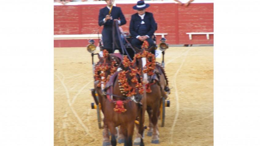 Vuelven los tradicionales concursos de caballos para la feria