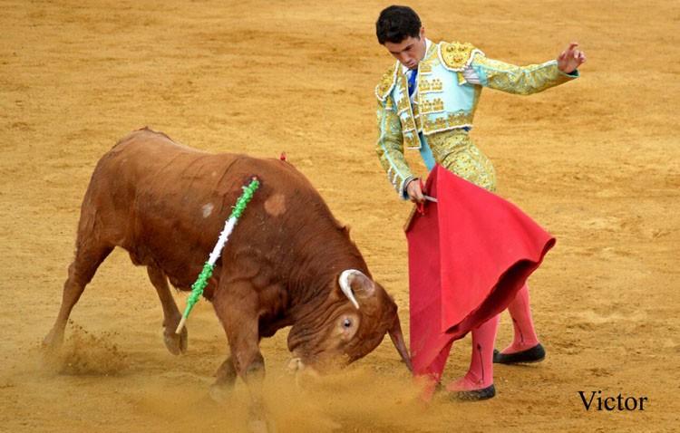El novillero utrerano Daniel Araujo debuta con picadores