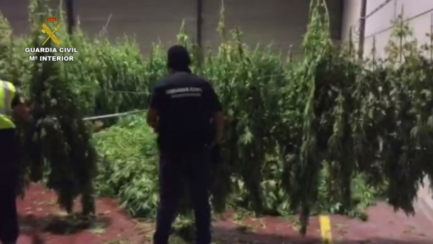 La Guardia Civil de Utrera interviene más de 2.500 kilos de marihuana
