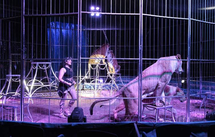 El Ayuntamiento prohíbe la instalación de un circo por usar animales