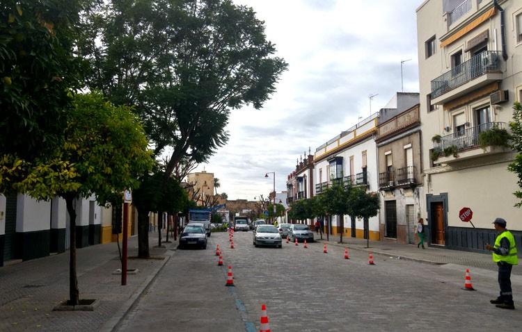 Parques y Jardines estudia eliminar las jacarandas de La Corredera