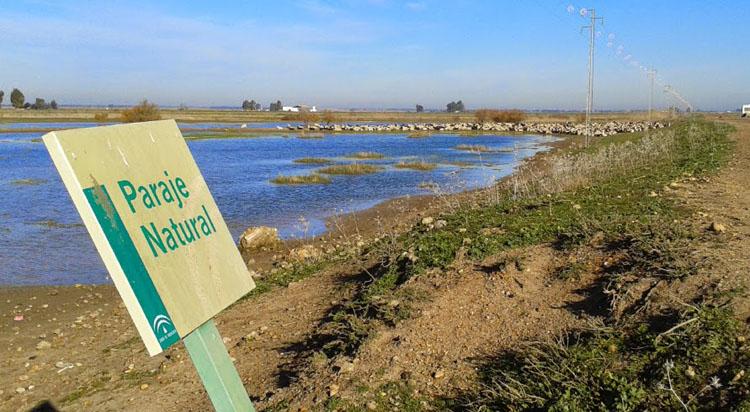 Ecologistas en Acción denuncia el «deterioro y abandono» del paraje natural «Brazo del Este» por la Junta de Andalucía