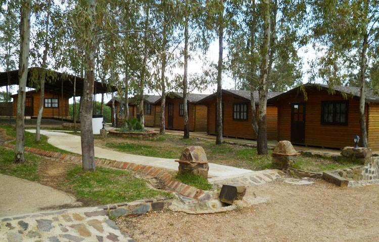 Un campamento de verano de la hermandad de los Aceituneros para 20 niños en riesgo de exclusión social