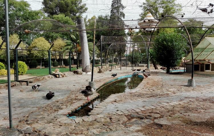 El Ayuntamiento eliminará los animales del parque de Consolación