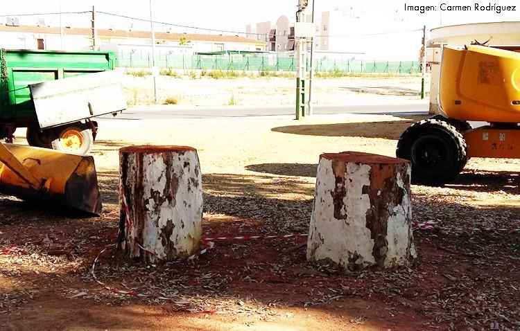 Los problemas de salud de los eucaliptos de la feria obligan a talar siete ejemplares