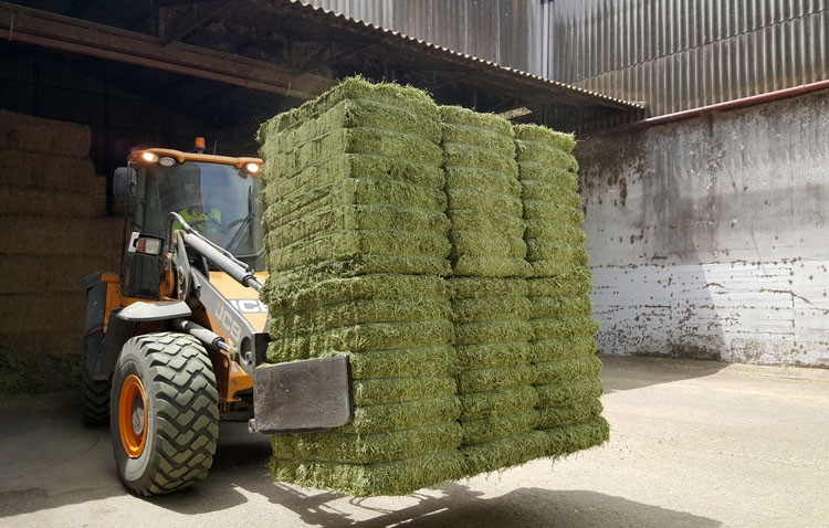 Alimento utrerano para las vacas más selectas del mundo