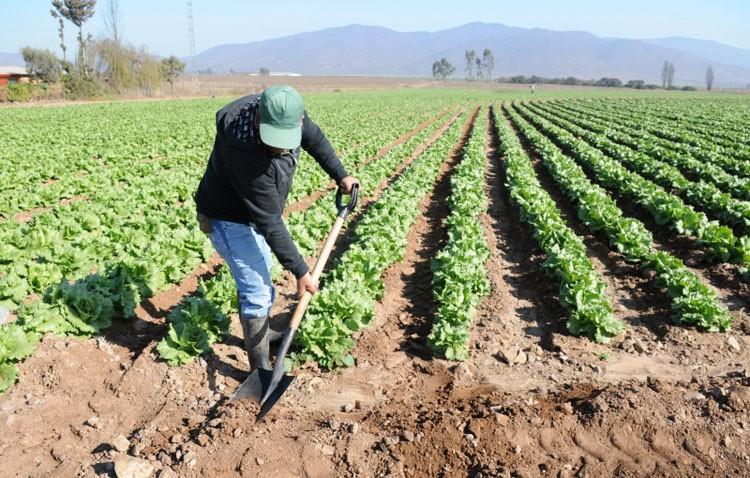 Comisiones Obreras denuncia la «situación de precariedad y abuso a la que son sometidos los trabajadores del campo»