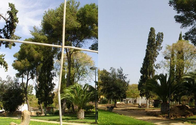 Equo-Sevilla denuncia la tala de pinos realizada por el Ayuntamiento en el parque de Consolación