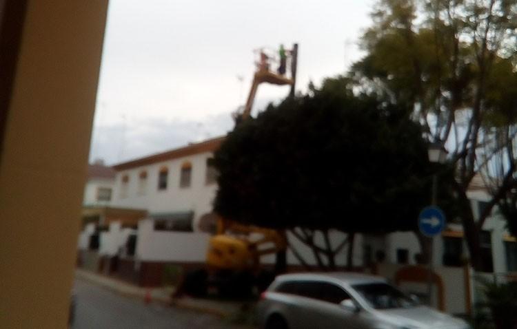 Otro árbol talado
