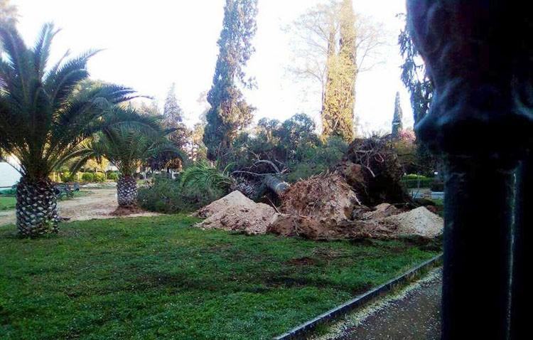 El PA denuncia que continúa la «sangría» de árboles en el parque de Consolación