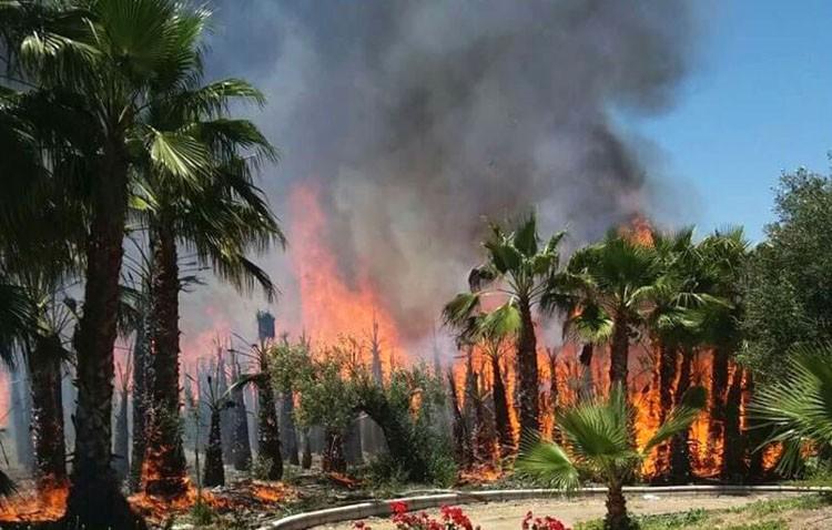 Un incendio desata el pánico en la romería de Guadalema de los Quintero