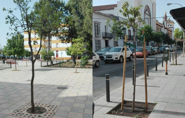 Plantados un tercio de los árboles que dejó comprados el anterior gobierno