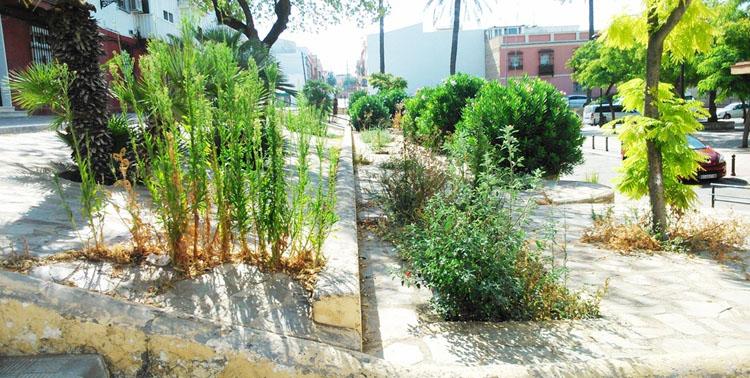 Podemos exige «medidas de urgencia» contra el «abandono» municipal de La Fontanilla