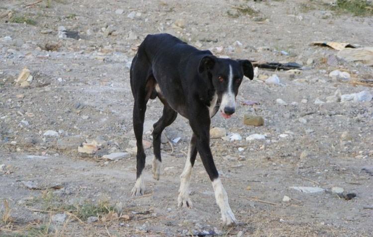 Una treintena de perros recogidos en Utrera en lo que va de 2018