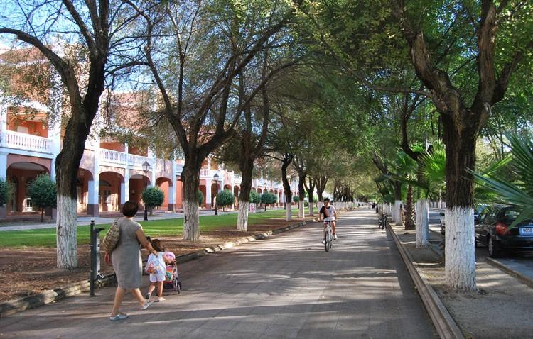 El gobierno defiende la eliminación de los árboles del paseo de Consolación, aunque en la oposición hablaba de «arboricidio»
