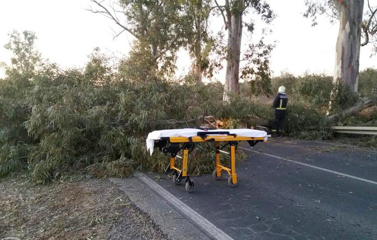 Herido un matrimonio tras chocar contra una gran rama atravesada en la carretera Utrera-Los Palacios