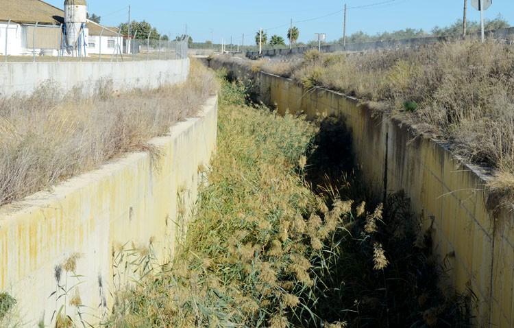 El peligroso «bosque» que ocupa el desvío del arroyo Calzas Anchas