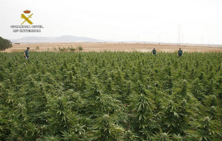 Desmantelada una red internacional de tráfico de marihuana con origen en un clan familiar de Utrera