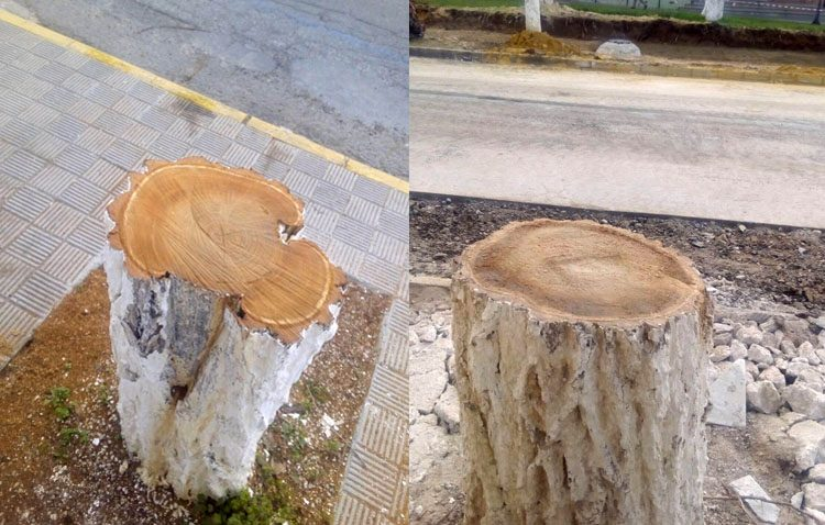 Una campaña de recogida de firmas contra la «tala masiva» de los árboles del paseo de Consolación